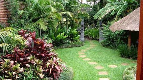 Cách trồng cây phong thủy trong vườn hút tài lộc - Ảnh 1.