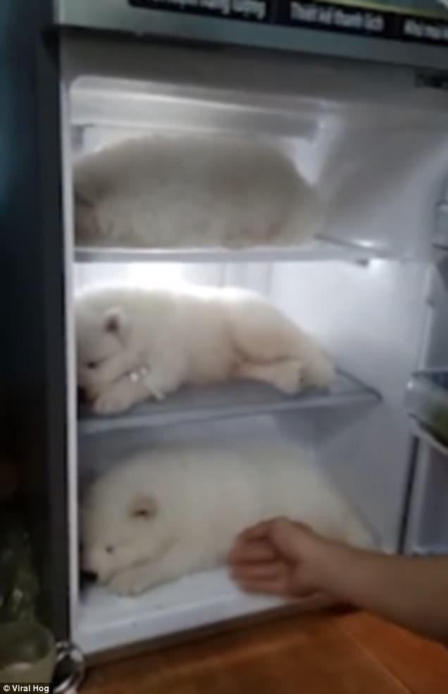 Clip thanh niên Việt Nam cho 3 chú chó con vào tủ lạnh tránh nóng lên báo nước ngoài - Ảnh 1.