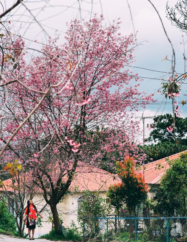 4 lý do hấp dẫn khiến Đà Lạt là nơi bạn nên quẳng gánh lo đi mà đến ngay trong tháng 1 - Ảnh 5.
