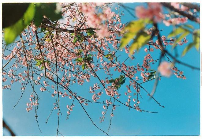 4 lý do hấp dẫn khiến Đà Lạt là nơi bạn nên quẳng gánh lo đi mà đến ngay trong tháng 1 - Ảnh 1.