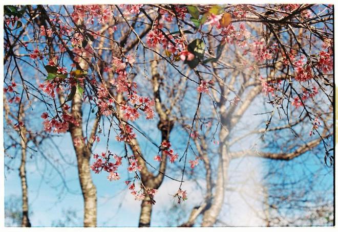 4 lý do hấp dẫn khiến Đà Lạt là nơi bạn nên quẳng gánh lo đi mà đến ngay trong tháng 1 - Ảnh 3.