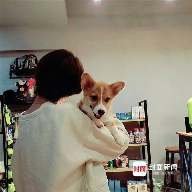 Giữ chó người khác mà quyết không trả, người phụ nữ tàn ác còn đẩy chú chó từ tầng 6 xuống đất - Ảnh 1.