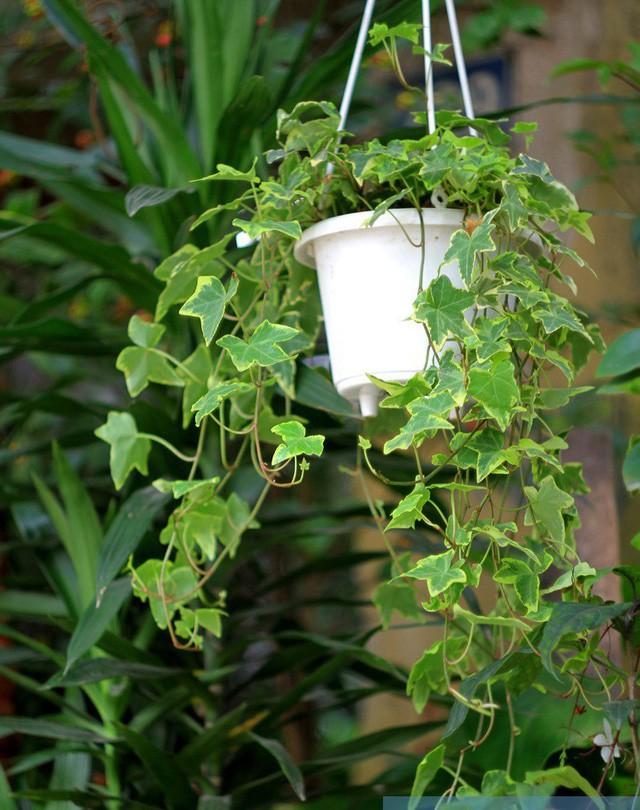 photo 1 1516060601517 Nên chọn trồng cây gì trước cửa để hút tài lộc năm Mậu Tuất 2018