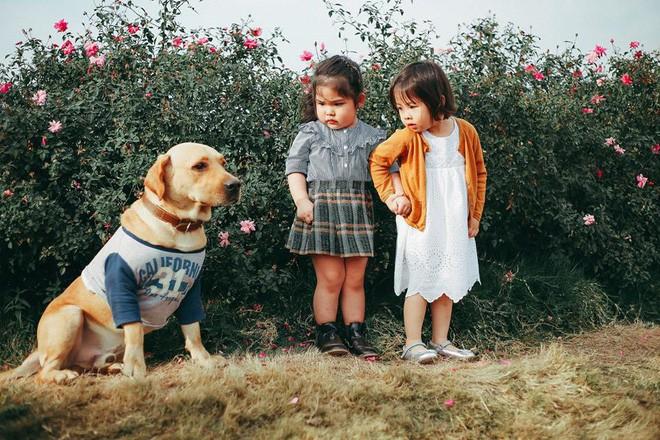 Cô bé sợ chó tái xuất trong bộ ảnh mới: Chụp ảnh với thỏ nhưng chỉ dám nhìn! - Ảnh 1.