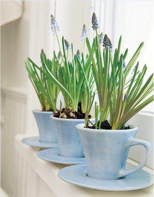 Gợi ý trồng cây, trồng hoa siêu ngọt ngào trong bộ ấm chén, bạn đã sẵn sàng để đón mùa xuân? - Ảnh 15.