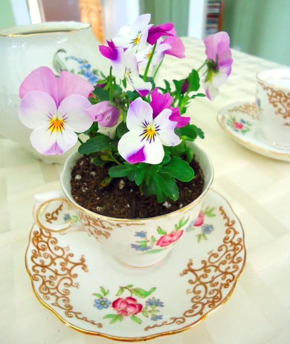Gợi ý trồng cây, trồng hoa siêu ngọt ngào trong bộ ấm chén, bạn đã sẵn sàng để đón mùa xuân? - Ảnh 16.