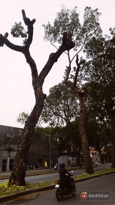 Chùm ảnh: Người Sài Gòn đặt hoa hồng trên gốc những hàng cây xanh bị đốn hạ ở đuờng Tôn Đức Thắng - Ảnh 18.