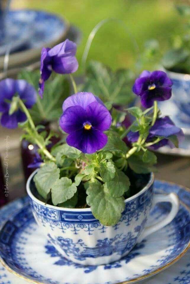 Gợi ý trồng cây, trồng hoa siêu ngọt ngào trong bộ ấm chén, bạn đã sẵn sàng để đón mùa xuân? - Ảnh 19.