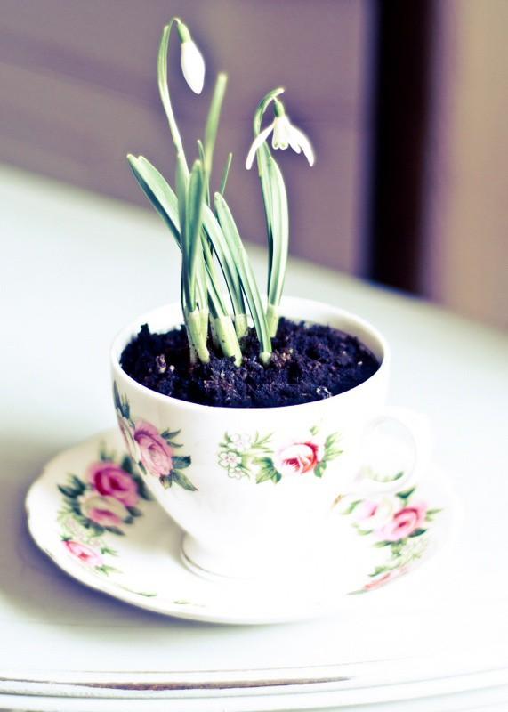 Gợi ý trồng cây, trồng hoa siêu ngọt ngào trong bộ ấm chén, bạn đã sẵn sàng để đón mùa xuân? - Ảnh 20.