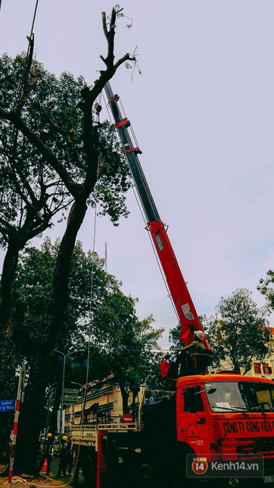 Chùm ảnh: Người Sài Gòn đặt hoa hồng trên gốc những hàng cây xanh bị đốn hạ ở đuờng Tôn Đức Thắng - Ảnh 3.