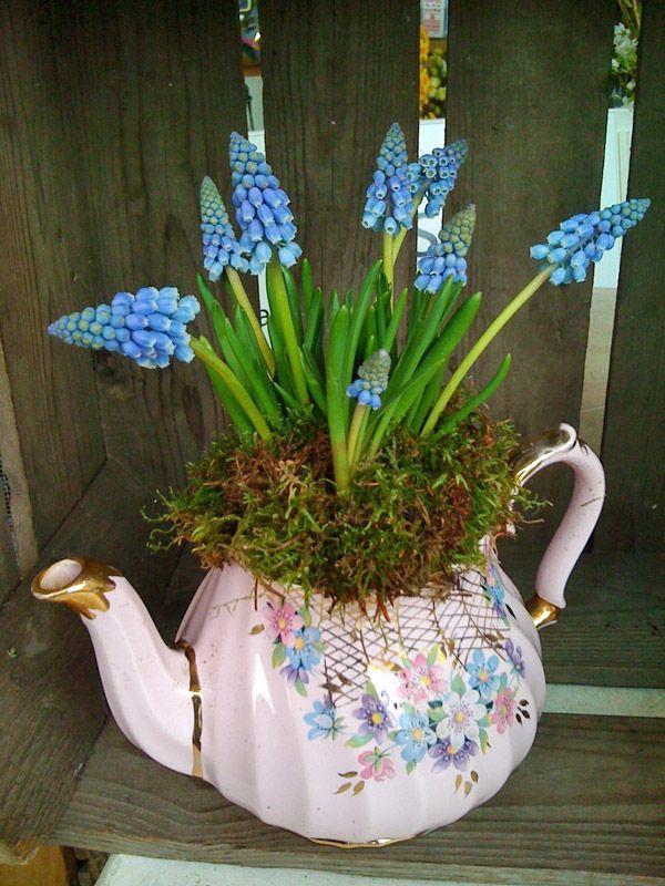 Gợi ý trồng cây, trồng hoa siêu ngọt ngào trong bộ ấm chén, bạn đã sẵn sàng để đón mùa xuân? - Ảnh 4.