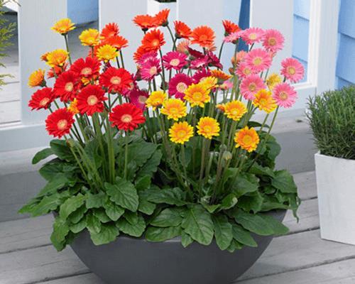 photo 4 1516060601528 Nên chọn trồng cây gì trước cửa để hút tài lộc năm Mậu Tuất 2018