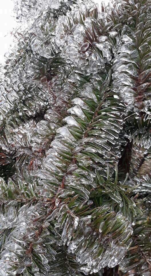 Tuyết phủ trắng xóa đỉnh Fansipan, du khách ngỡ ngàng như đang ở trời Âu - Ảnh 6.