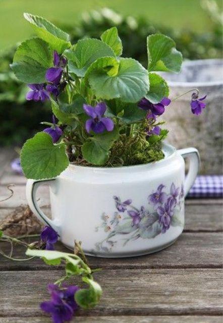 Gợi ý trồng cây, trồng hoa siêu ngọt ngào trong bộ ấm chén, bạn đã sẵn sàng để đón mùa xuân? - Ảnh 9.