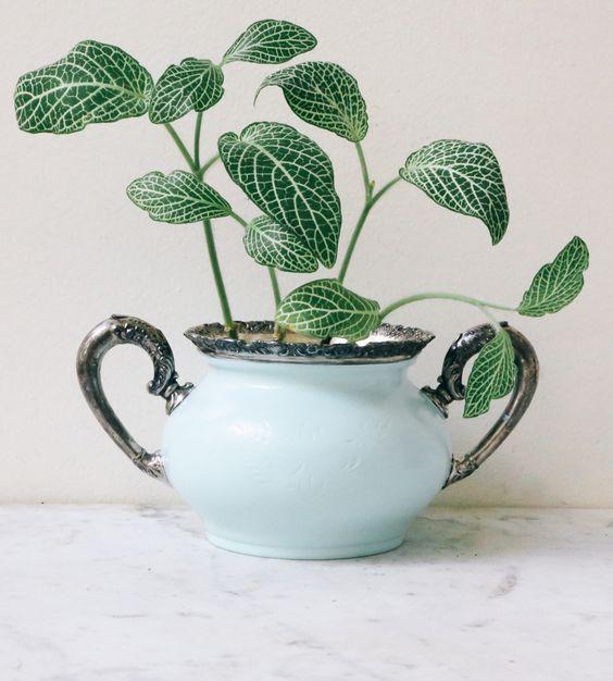 Gợi ý trồng cây, trồng hoa siêu ngọt ngào trong bộ ấm chén, bạn đã sẵn sàng để đón mùa xuân? - Ảnh 10.