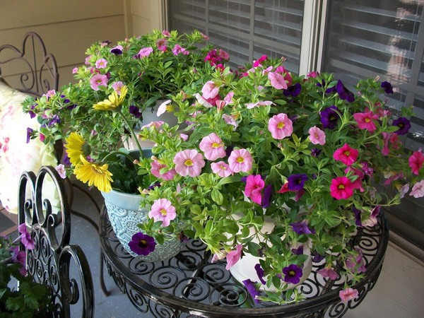 Chọn hạt giống trồng hoa để không khí Xuân ngập tràn cả nhà - Ảnh 3.