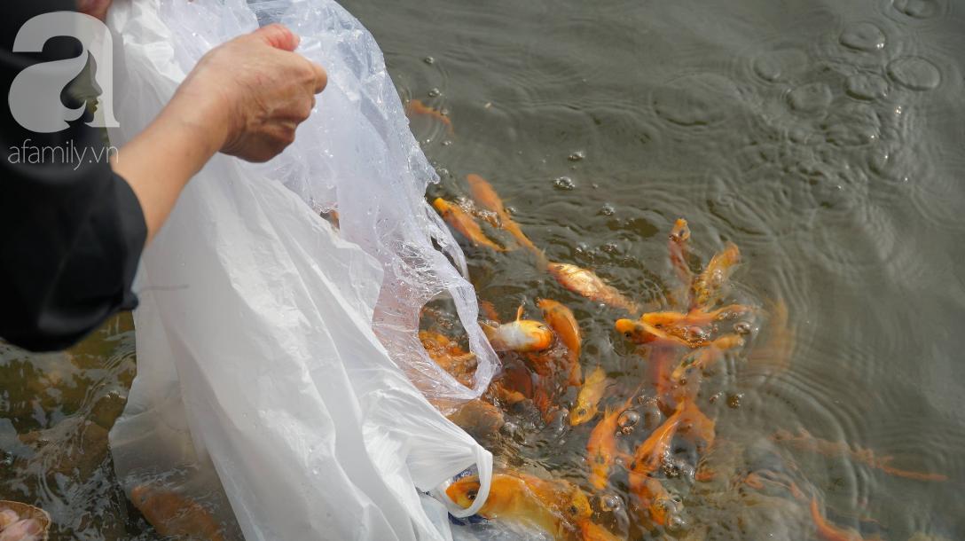 TP.HCM: Cá chép cúng ông Táo vừa thả xuống sông chưa kịp về trời đã bị chích điện, vớt lên bán lại - Ảnh 4.