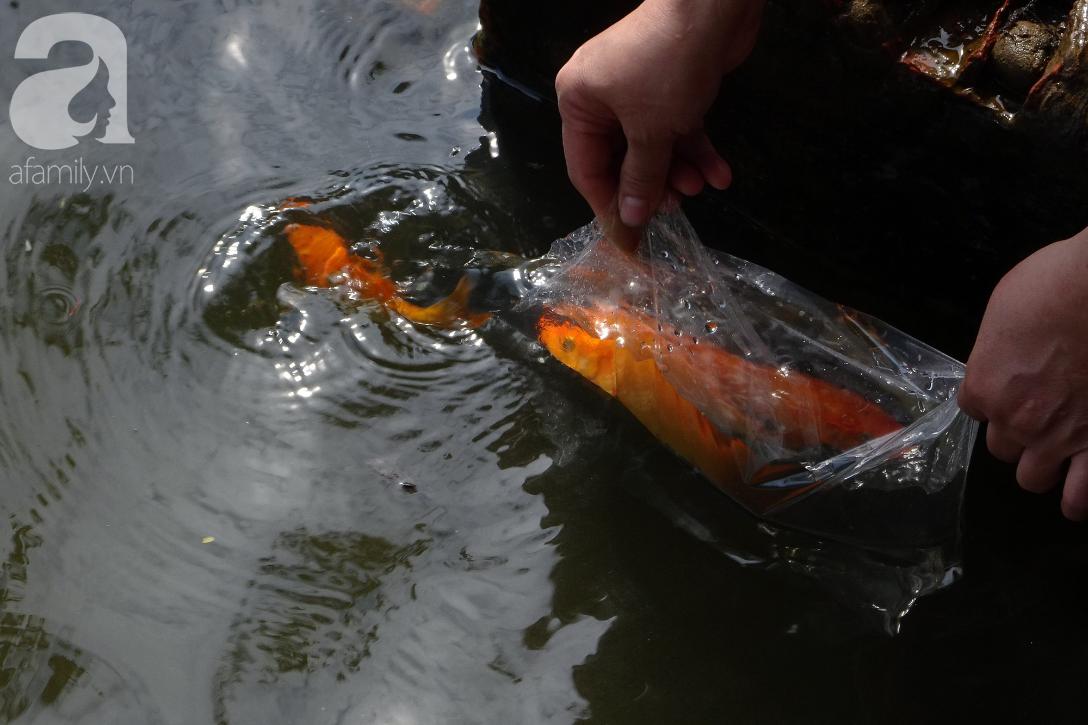 TP.HCM: Cá chép cúng ông Táo vừa thả xuống sông chưa kịp về trời đã bị chích điện, vớt lên bán lại - Ảnh 10.