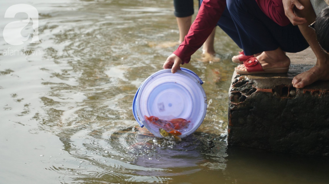 TP.HCM: Cá chép cúng ông Táo vừa thả xuống sông chưa kịp về trời đã bị chích điện, vớt lên bán lại - Ảnh 11.