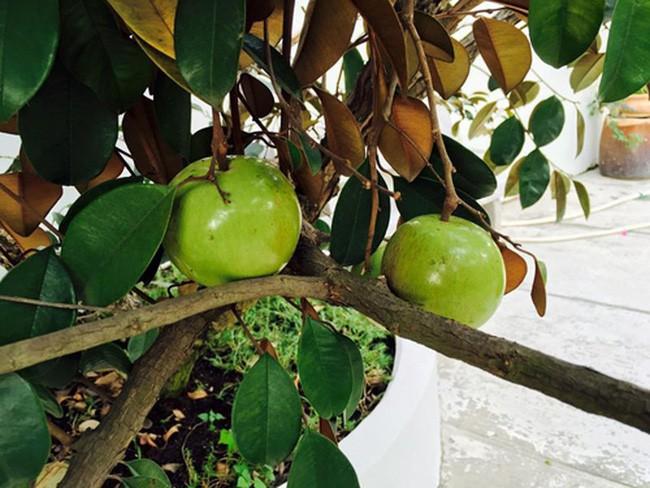 Nhà vườn bình yên và ngập tràn cây ăn quả của diễn viên Việt Trinh ở Bình Dương - Ảnh 13.