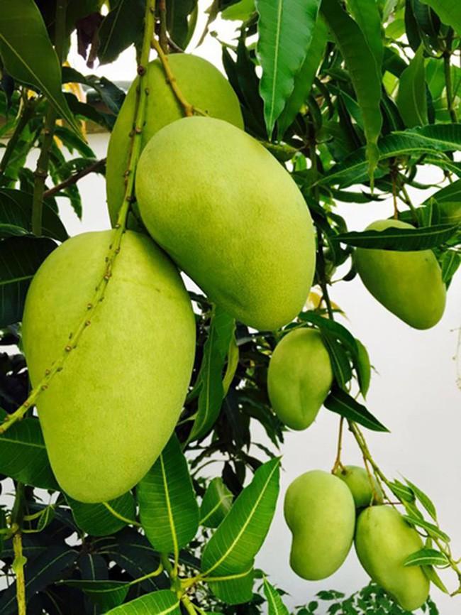Nhà vườn bình yên và ngập tràn cây ăn quả của diễn viên Việt Trinh ở Bình Dương - Ảnh 12.