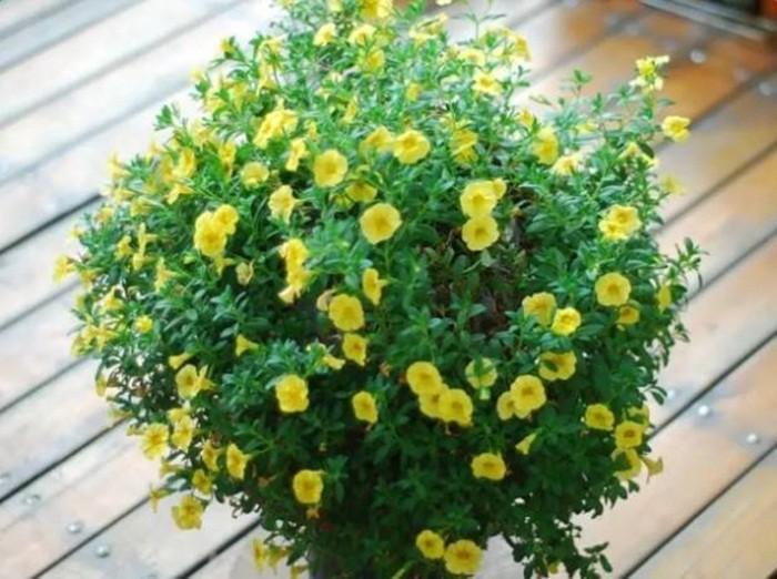 Biến sân thượng trống thành khu vườn đủ loại cây hoa đẹp như công viên, gia đình trẻ khiến nhiều người ghen tị - Ảnh 40.