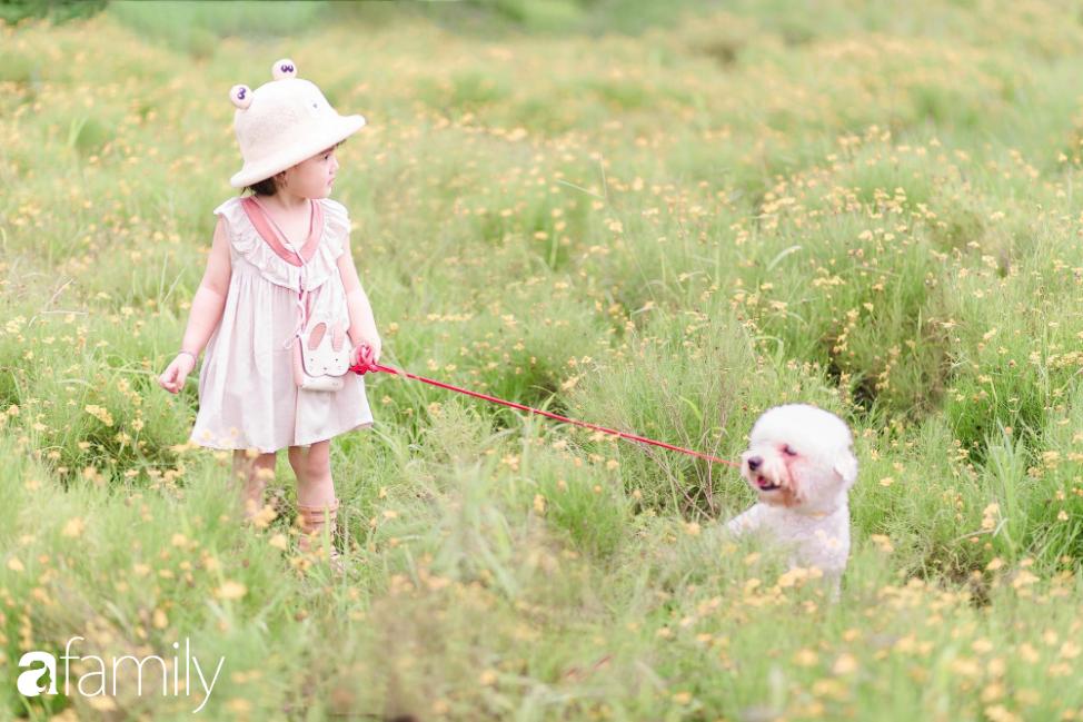 """Sự thật về thảo nguyên hoa với rừng lá phong đỏ cực """"ảo diệu"""", nơi đang hút các gia đình Hà Nội đổ xô đến chụp ảnh cuối tuần - Ảnh 1."""