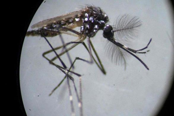 Phát hiện trường hợp đầu tiên trên thế giới lây bệnh sốt xuất huyết qua đường tình dục - Ảnh 1.