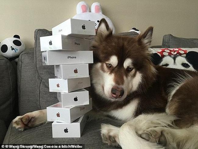 Từng chơi ngông mua 8 chiếc iPhone cho thú cưng, giờ đây cậu ấm của tỷ phú bất động sản Trung Quốc rơi vào cảnh bị cấm khỏi dịch vụ cao cấp vì... không chịu trả nợ - Ảnh 3.