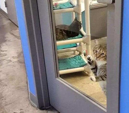 """Chú mèo bị """"biệt giam"""" vì liên tục giúp các anh em động vật cơ nhỡ khác trốn trại - Ảnh 3."""