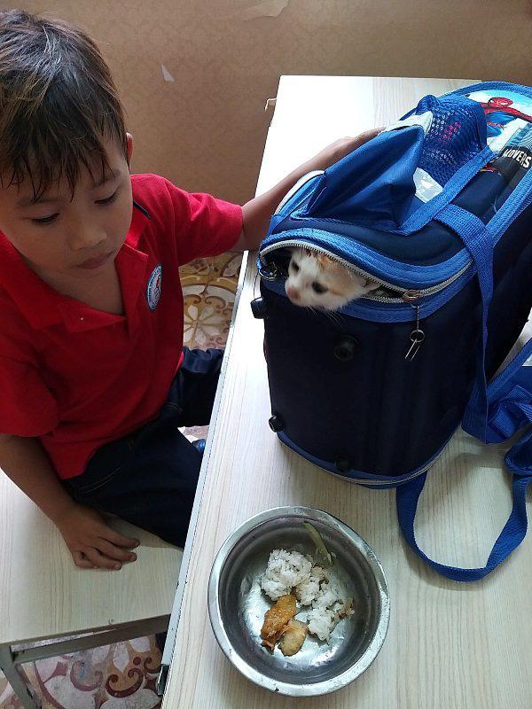 Phát hiện học sinh lớp 1 mang mèo đến lớp, cô giáo không phạt lại có hành động bất ngờ khiến cậu bé... thở phào - Ảnh 3.