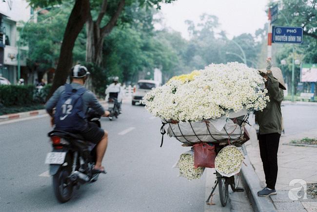 Mùa hè lưu luyến mãi chưa đi, nhưng cúc họa mi vẫn giữ đúng hẹn, chúm chím trên phố Hà Nội khi tháng Mười Một về - Ảnh 1.