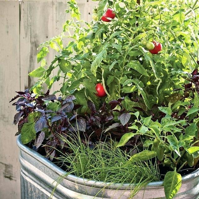 Những ý tưởng cùng mẹo thiết kế vườn rau siêu tuyệt vời giúp không gian nhỏ hẹp cũng thành đáng mơ ước - Ảnh 4.