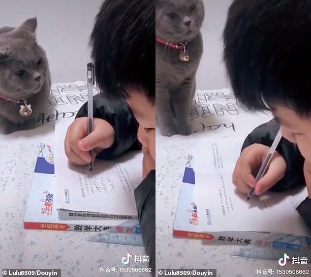 """""""Boss"""" mèo nổi tiếng internet vì thường xuyên giám sát cậu chủ nhỏ làm bài tập, không tập trung là bị lườm cháy mặt - Ảnh 2."""