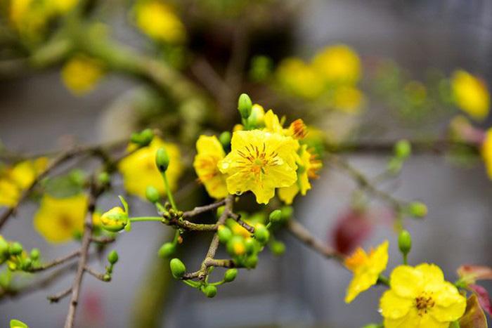 Những loại cây hợp phong thủy để bày trong nhà ngày Tết - Ảnh 2.