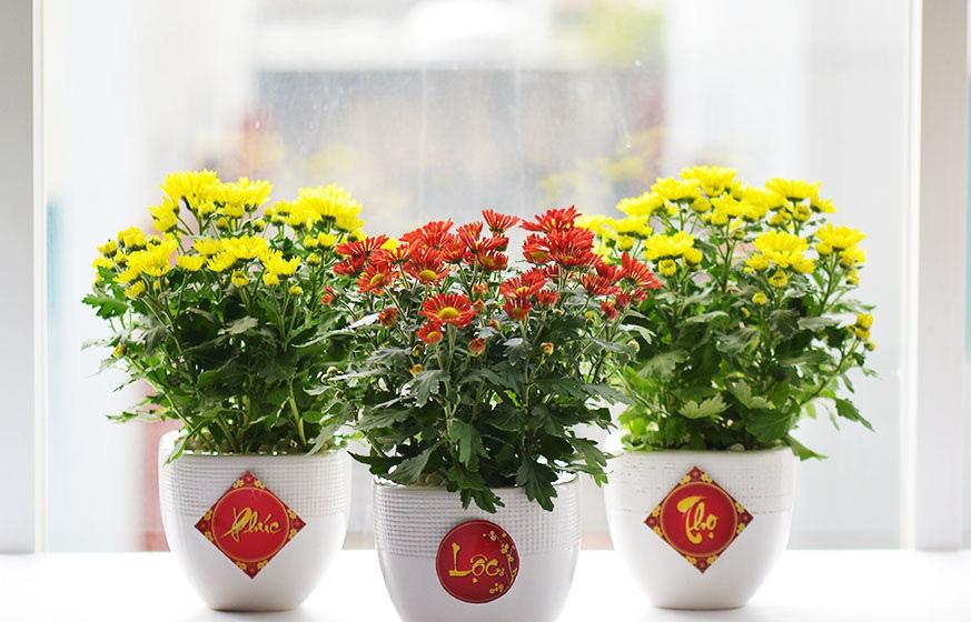 Những loại cây hợp phong thủy để bày trong nhà ngày Tết - Ảnh 4.