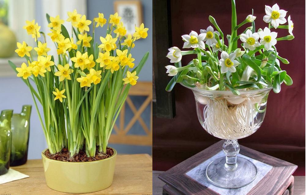 Những loại cây hợp phong thủy để bày trong nhà ngày Tết - Ảnh 6.