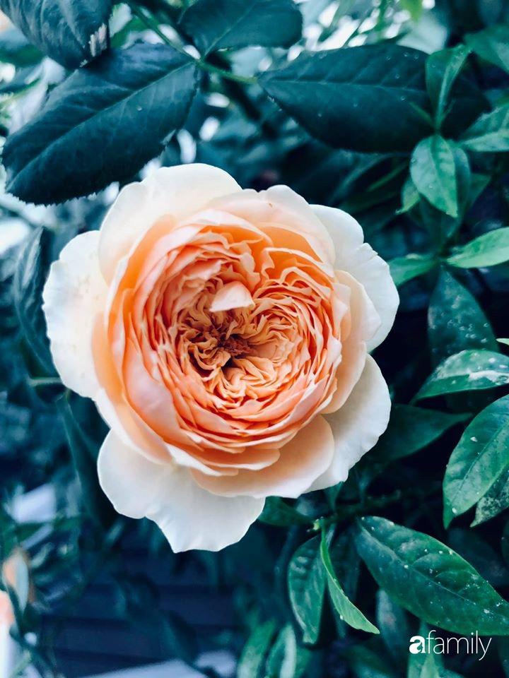 Ngày đầu năm ghé thăm những góc nhỏ dịu dàng sắc hoa trong căn nhà ấm cúng của bà mẹ trẻ Hà Nội - Ảnh 29.