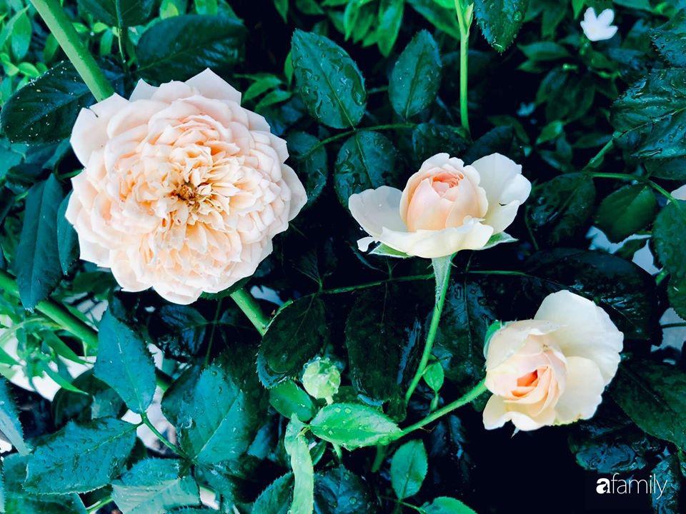 Ngày đầu năm ghé thăm những góc nhỏ dịu dàng sắc hoa trong căn nhà ấm cúng của bà mẹ trẻ Hà Nội - Ảnh 28.