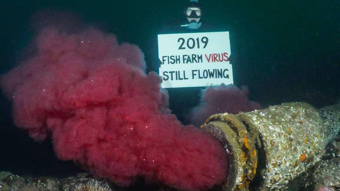 Suốt 2 năm qua người Canada không dám ăn đến một miếng cá hồi hoang dã, nguyên nhân chính là vì đường ống địa ngục này - Ảnh 3.