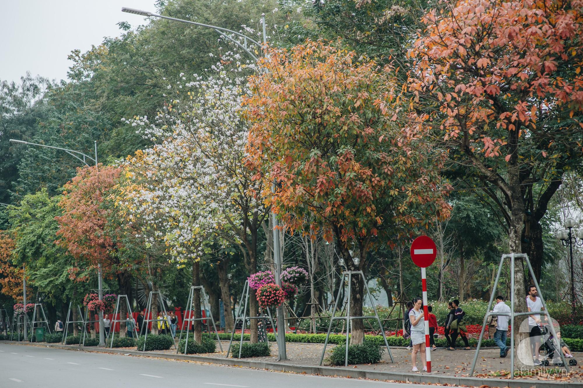 Hà Nội những ngày thay lá: Mùa xuân mang hương sắc mùa thu và tình