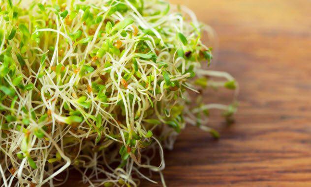Lợi ích sức khỏe tuyệt vời của cỏ linh lăng, từ thúc đẩy giảm cân đến cải thiện quá trình tiêu hóa - Ảnh 5.
