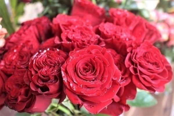 Hoa hồng không chỉ để cho đẹp nhà đẹp cửa, bạn còn có thể làm thuốc chữa bệnh, dưỡng da mịn đẹp - Ảnh 4.