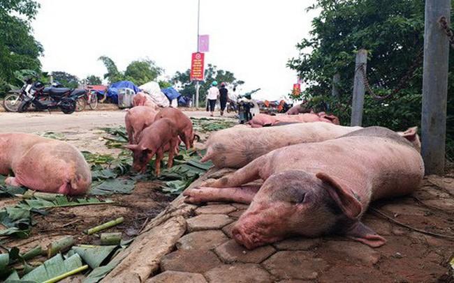 Chọn thịt lợn sạch theo hướng dẫn của chuyên gia trước tình hình dịch tả lợn châu Phi bùng phát - Ảnh 2.