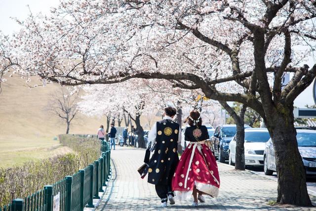 Điểm danh những lễ hội hoa anh đào nổi tiếng xứ Hàn - Ảnh 4.