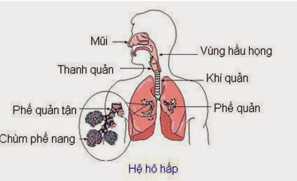 Vì sao mỗi gia đình nên sở hữu chiếc máy xông mũi họng - Ảnh 1.
