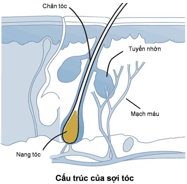 Tóc rụng có thể do bạn đang gặp 1 loạt vấn đề về sức khỏe - Ảnh 1.