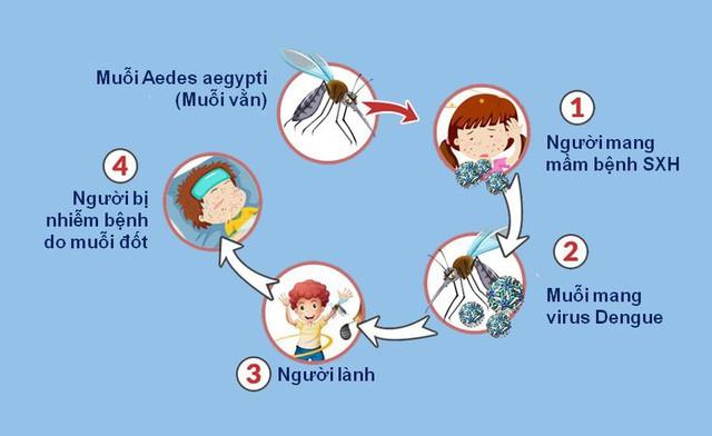 Sốt xuất huyết: Hiểu đúng để phòng bệnh hiệu quả - Ảnh 2.