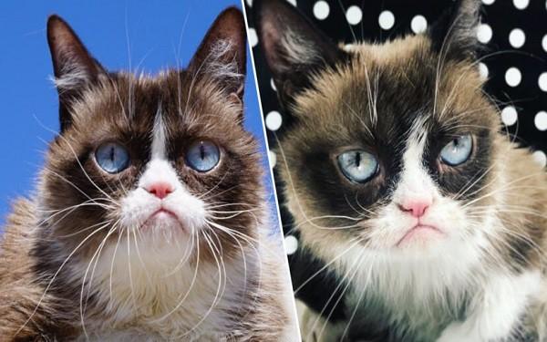 Cô mèo với khuôn mặt hờn cả thế giới, nổi danh nhất trong thế giới meme đã qua đời trong sự bàng hoàng của cư dân mạng - Ảnh 1.