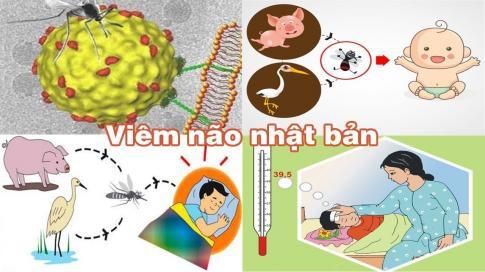 Đã có 1 trường hợp trẻ mắc viêm não Nhật Bản tại Hà Nội: Bệnh viêm não Nhật Bản có lây không và những ai dễ mắc bệnh? - Ảnh 2.